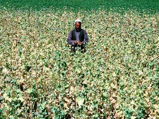 Afghanopium1s